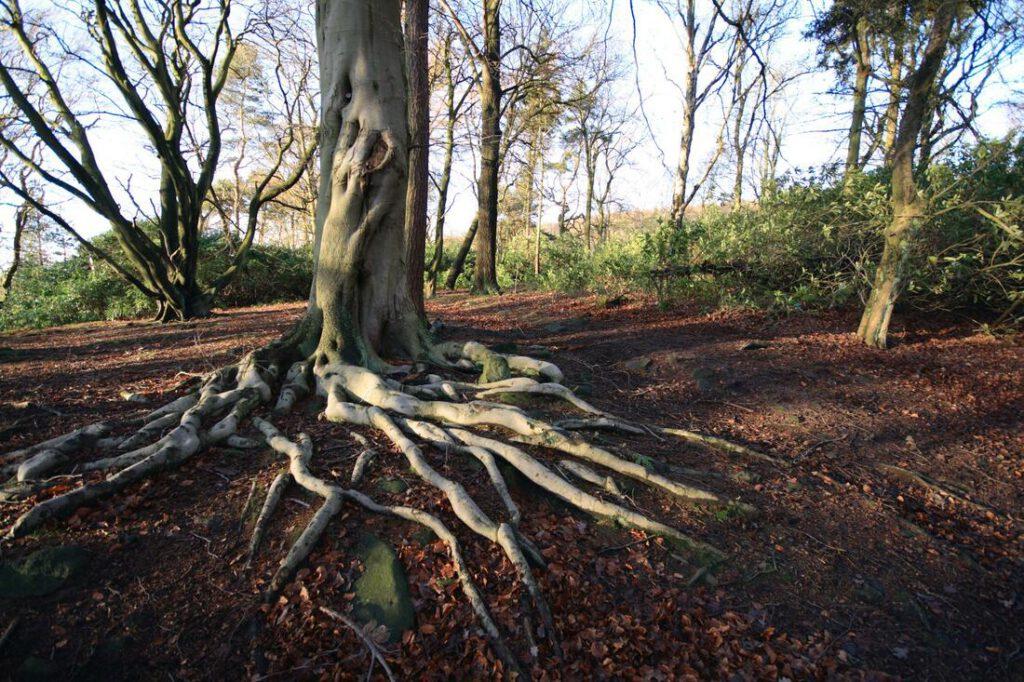 arlington-foundation-repair-root-barrier-1_orig